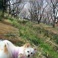 桜を見に行きました♪